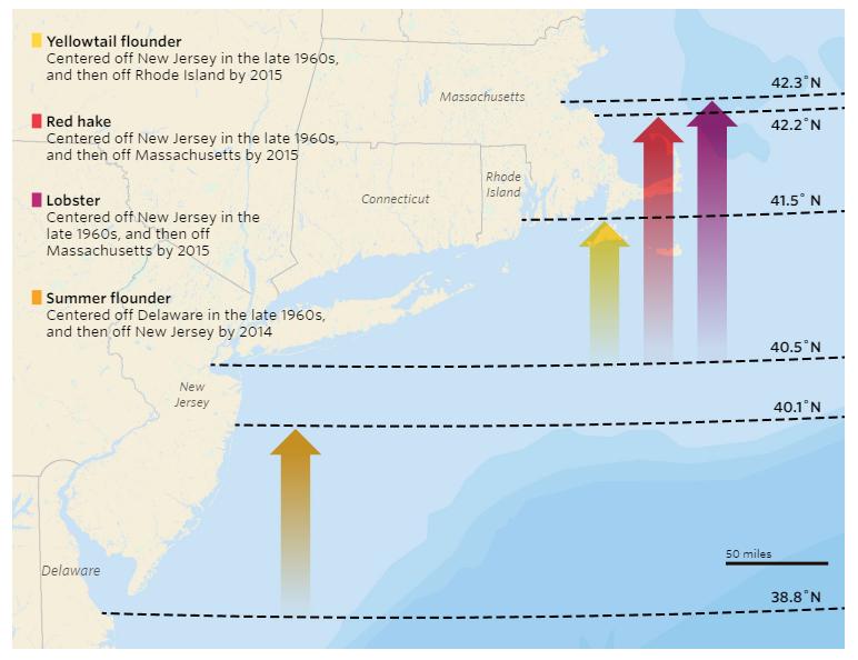 Source: Rutgers University OceanAdapt