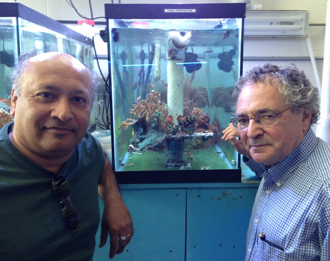 Rutgers Scientists Help Create World's Largest Coral Gene Database