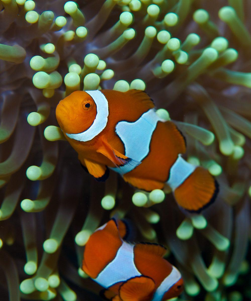 Finding Nemo: Scientifically!