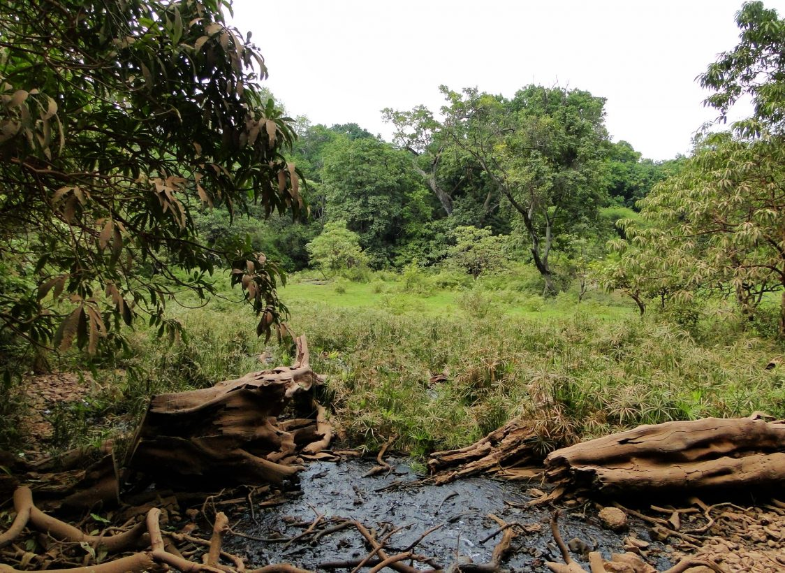 Springs were Critical Water Sources for Early Humans in East Africa