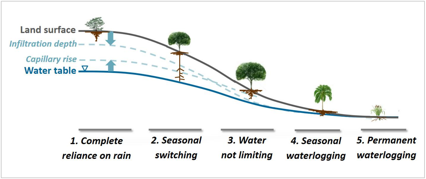Tree and plant root depths vary, depending on climate, soil and water conditions, including rainwater infiltration and ground water levels. Ying Fan Reinfelder/Rutgers University-New Brunswick