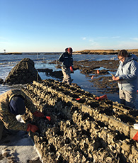 Recycled Oyster Shells and 'Oyster Castles' Create Living