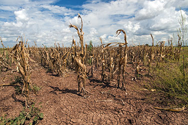 More Wet and Dry Weather Extremes Projected with Global Warming
