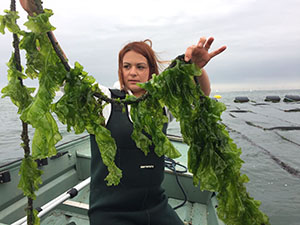 """Genome of Sea Lettuce that Spawns Massive """"Green Tides"""" Decoded"""