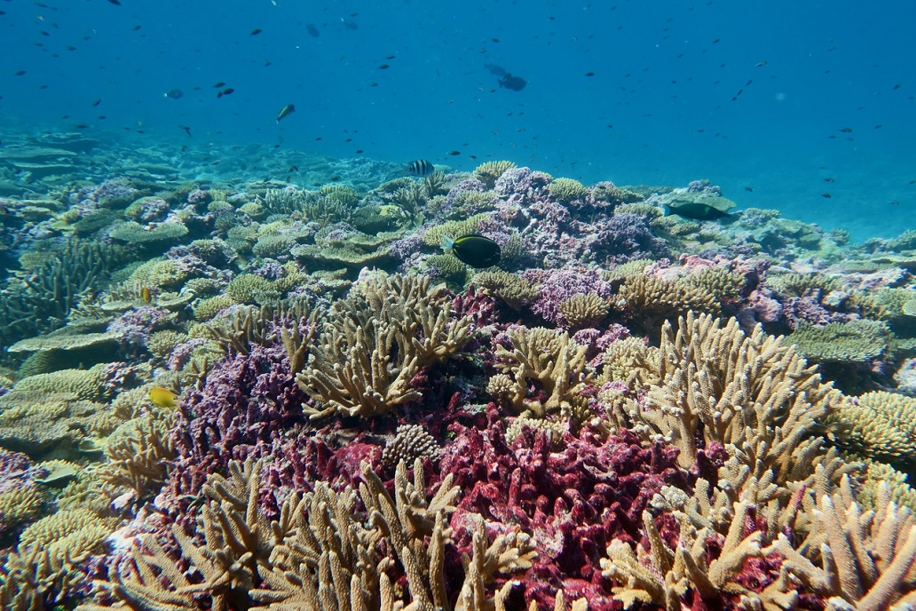 Corals, which are threatened by global climate change and ocean acidification, support a wide range of reef fish at Baker reef in the Pacific Remote Islands. Photo: NOAA Fisheries/Morgan Winston