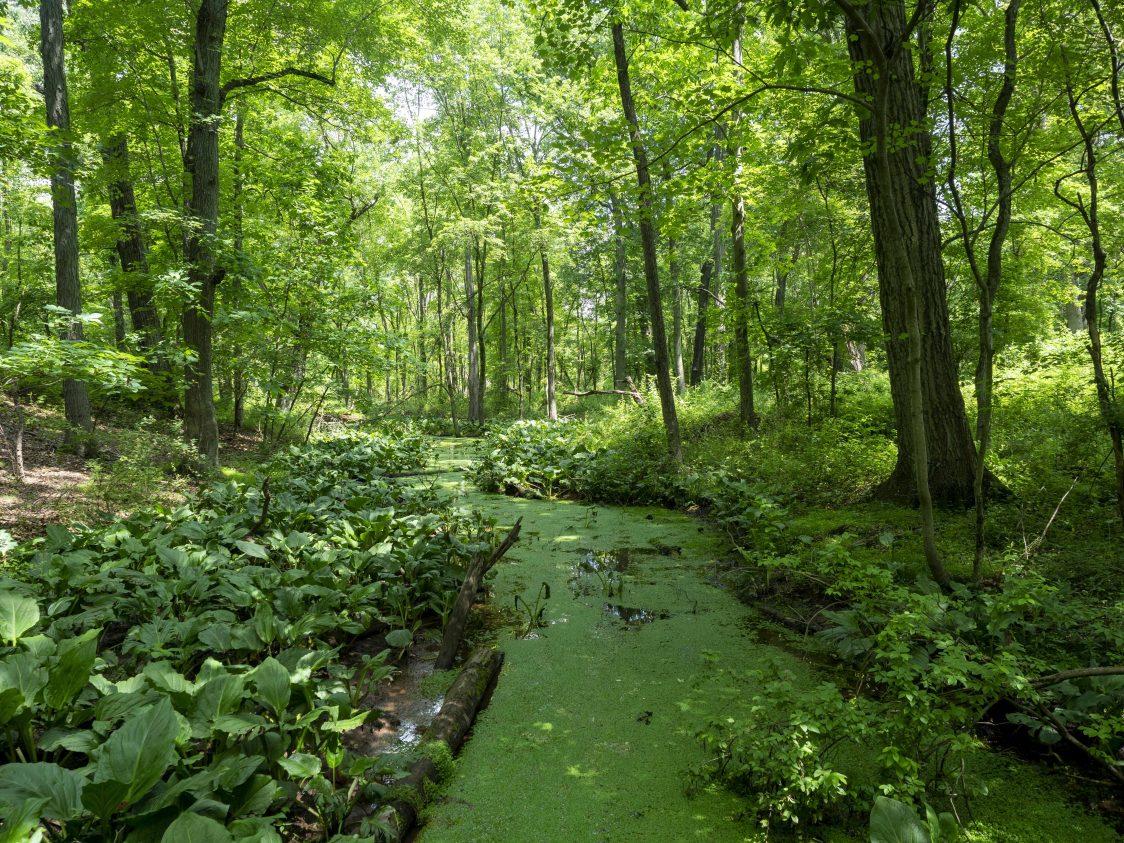Mettler's Woods, Photo by Matthew Drews/Rutgers University