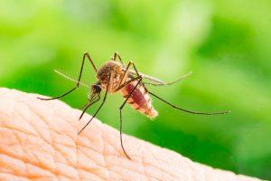 Mosquitoes NJ: Warmer, wetter summers bring more bites, more killer viruses
