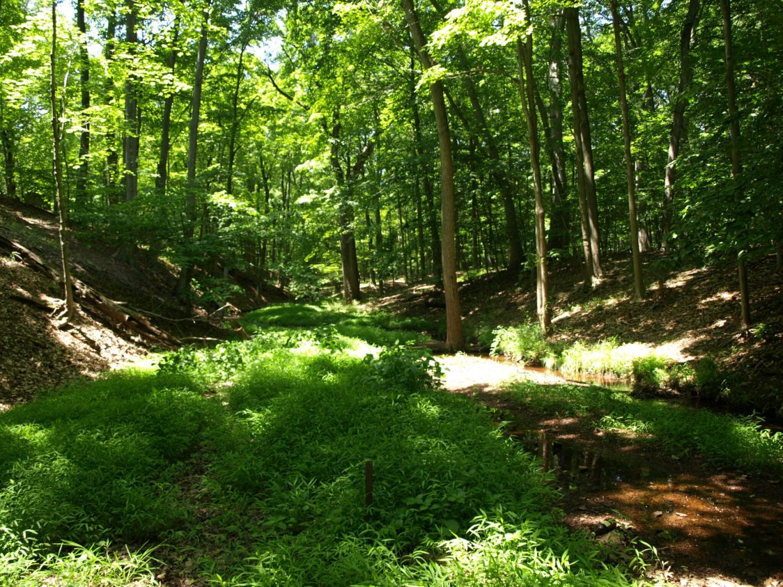 Nearly 400 acres of contiguous forest, the land was designated a natural ecological preserve and teaching area by the Rutgers University Board of Governors in 1976.