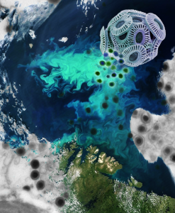 Viruses don't immediately kill algae but live in harmony with them. This image depicts viral infection of an Emiliania huxleyi cell superimposed on a satellite image of an E. huxleyi bloom in the Barents Sea. Credits: MODIS, NASA; Steve Gschmeissner, Photo Researchers Inc.; Kay Bidle & Christien Laber, Rutgers University