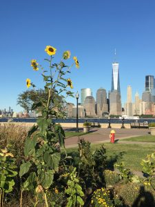 The financial district of New York City as seen from Liberty State Park in New Jersey during the COVID-19 pandemic. Photo: Pamela McElwee